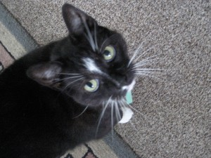 Emily and Jamie's cat Cindyrella