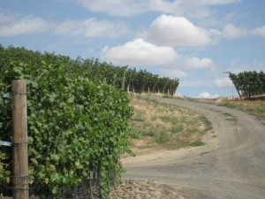 Road into the grapes