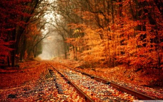 autumn scene with orange leaves and train tracks